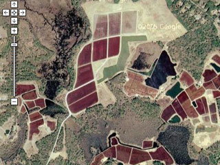 Cranberry bogs on Google Maps